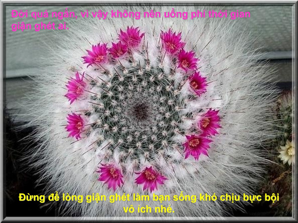 [Image: db88852f878858f0cecdf1e10bab44de-25-1024x768.jpg]