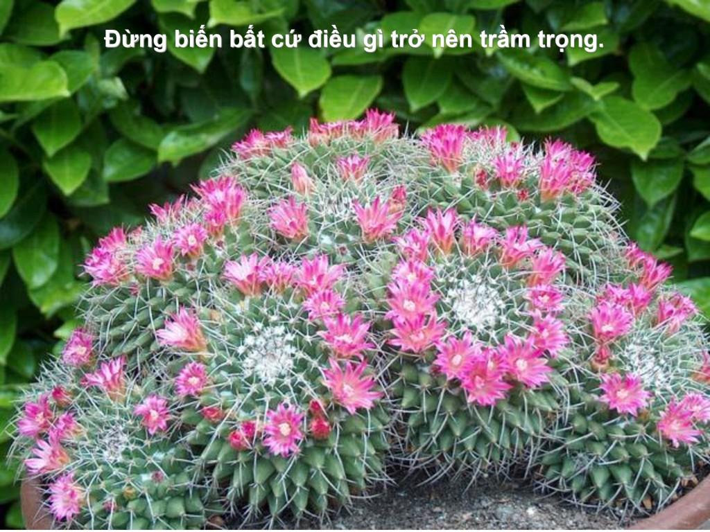 [Image: db88852f878858f0cecdf1e10bab44de-42-1024x768.jpg]