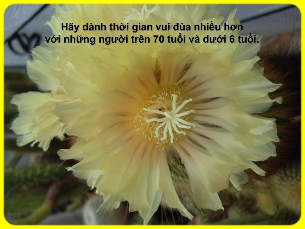 [Image: db88852f878858f0cecdf1e10bab44de-8-1024x768.jpg]